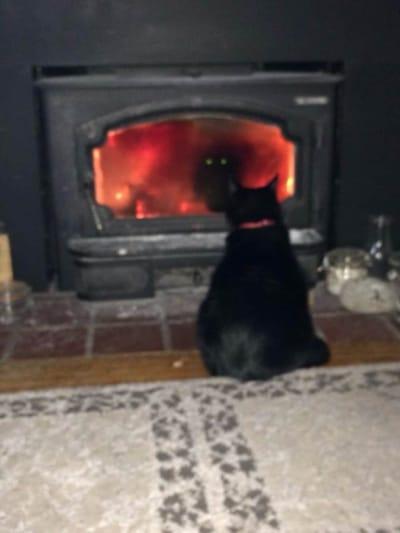 gato negro chimenea