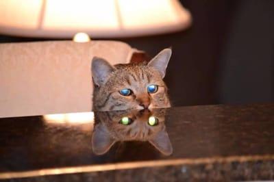 gato reflejo