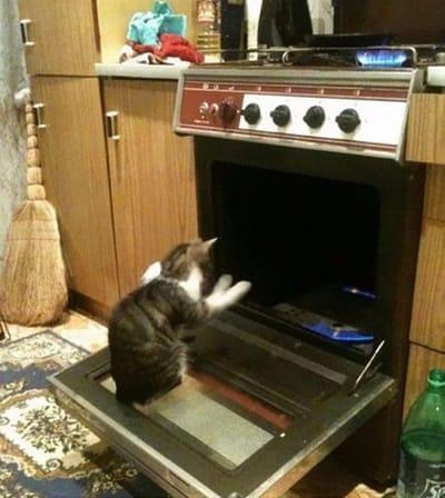 gato metido en un horno