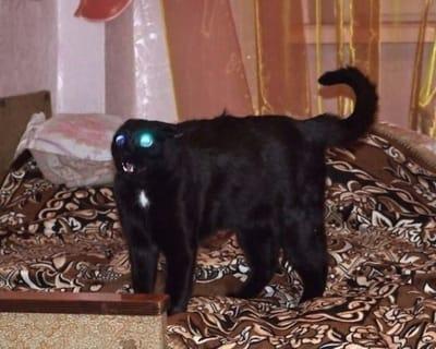 gato negro asustado