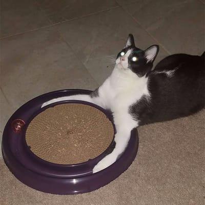 gato invocando a un demonio