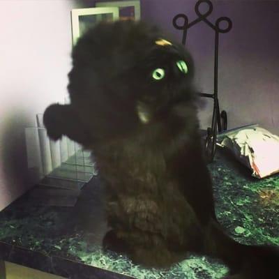 gato niña del exorcista