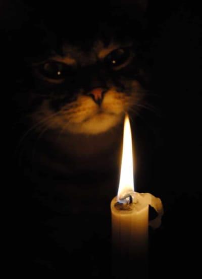 gato demonio halloween