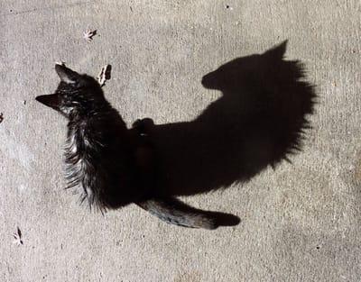 gato negro mostruo