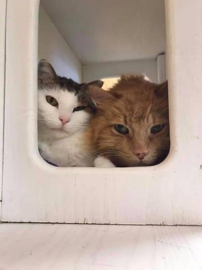 gato callejeros refugio