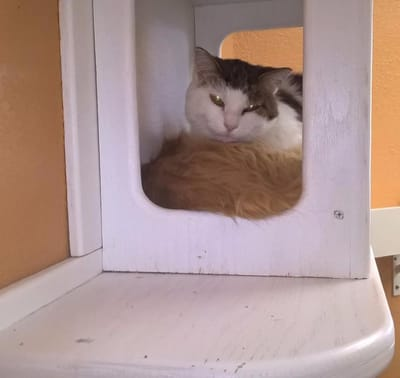 gatos callejeros durmiendo juntos
