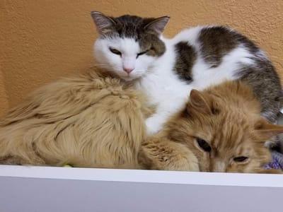 gatitos callejeros hermosos