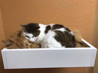 gatos callejeros durmiendo juntos caja
