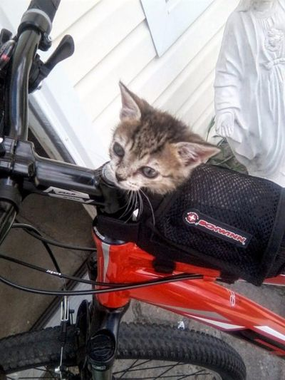 gatita en bicicleta