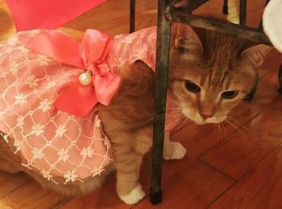 gata luna con su vestido de quinceañera