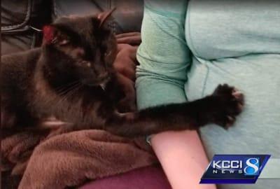 gato negro tocando la barriga de su mama