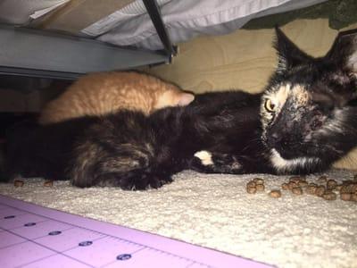 gatitos con su madre