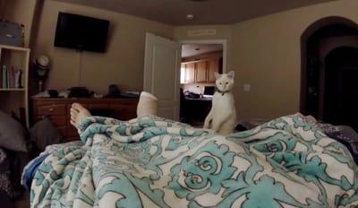 gato blanco vigilando humano