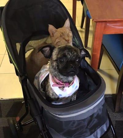 perro y gato en carrito