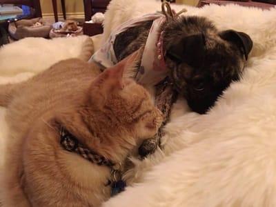 perro y gato acurrucados
