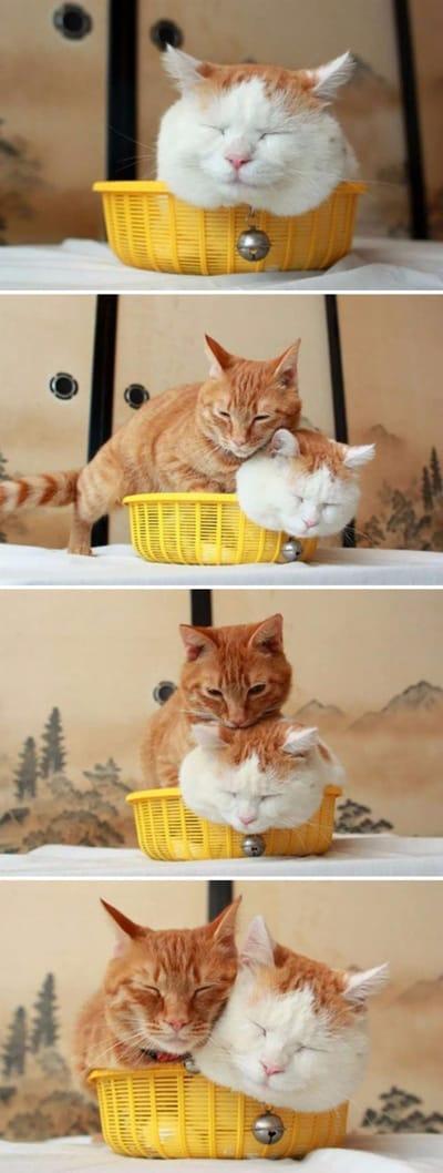 gato en cesto de la ropa