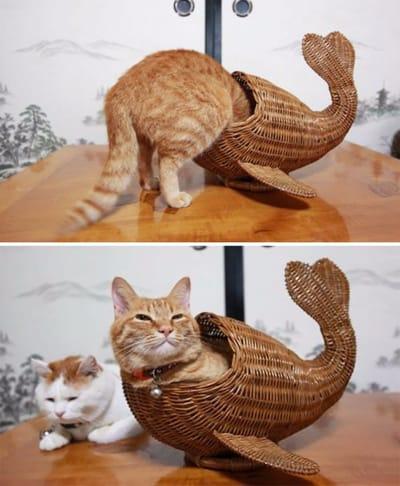 gato en figura de pez