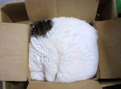 gato en caja de carton cuadrado