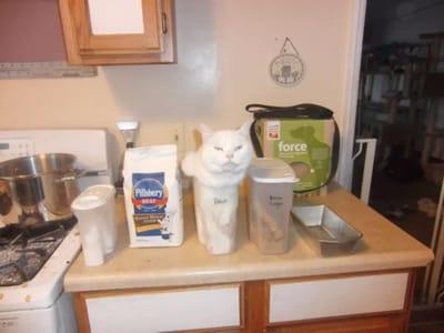 gato en jarra de agua