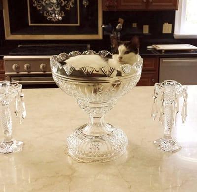 gato en copa de cristal