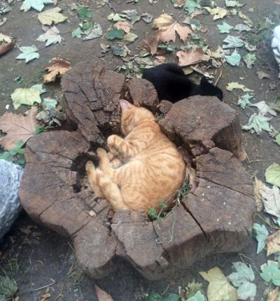gato en tronco de arbol