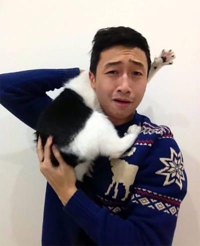 gato ataca humano