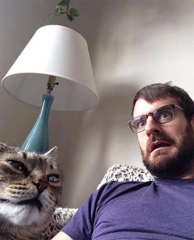 gato enfadado foto