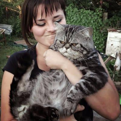 gato gordo enfadado