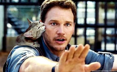 Chris Pratt beso gato
