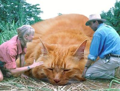 Alan Grant Ellie Sattler acarician gato Jurassic Park