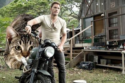 gato acechando Chris Patt Jurassic Park