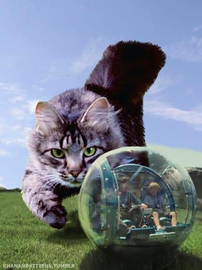 gato juega pelota Jurassic Park