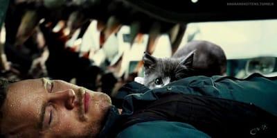 gato sigiloso asusta Chris Pratt  Jurassic Park