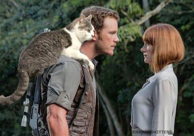 Chris Pratt dirige gatos  Jurassic Park