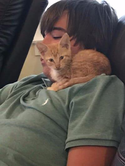gato rescatado con dueño