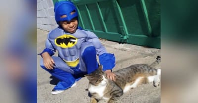 nino batman con gato