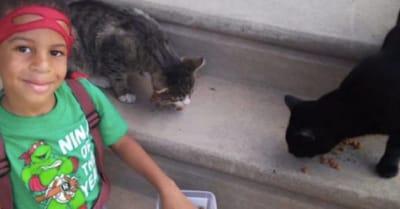 nino rescata gatos