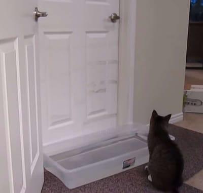 gato abriendo la puerta