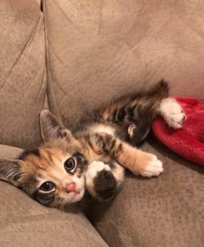 gatito en el sofa