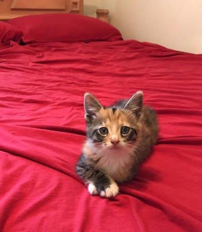 gatito en la cama