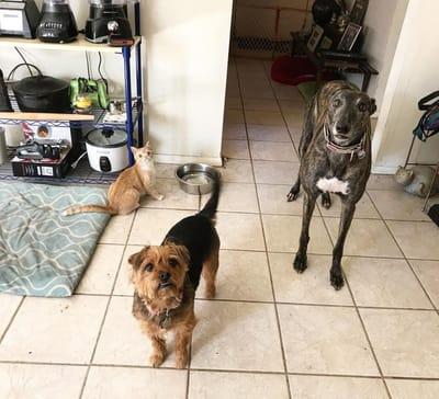 gatita con sus hermanos perros