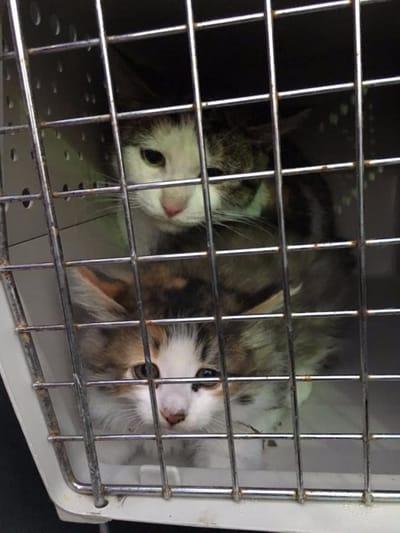 gatitos rescatados desague