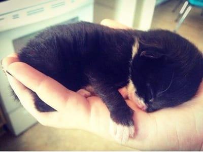 gatito encontrado bajo casa