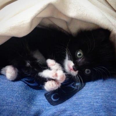 gatito acurrucado mantita