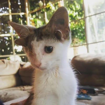 franki el gato