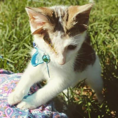 gato especial