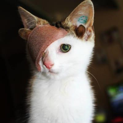 gato tuerto cuatro orejas