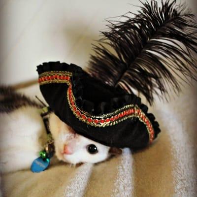gato con gorro de pirata