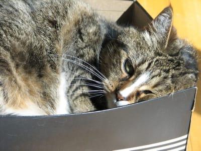 gato en una caja