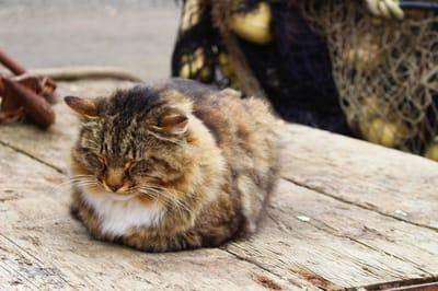 gato sandwich
